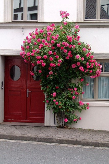 Free photo Road Home Plant Door Flower - Free Image on Pixabay - 200904 & Free photo: Road Home Plant Door Flower - Free Image on ...