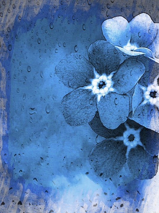 Vergissmeinnicht Forget-Me-Not · Free image on Pixabay
