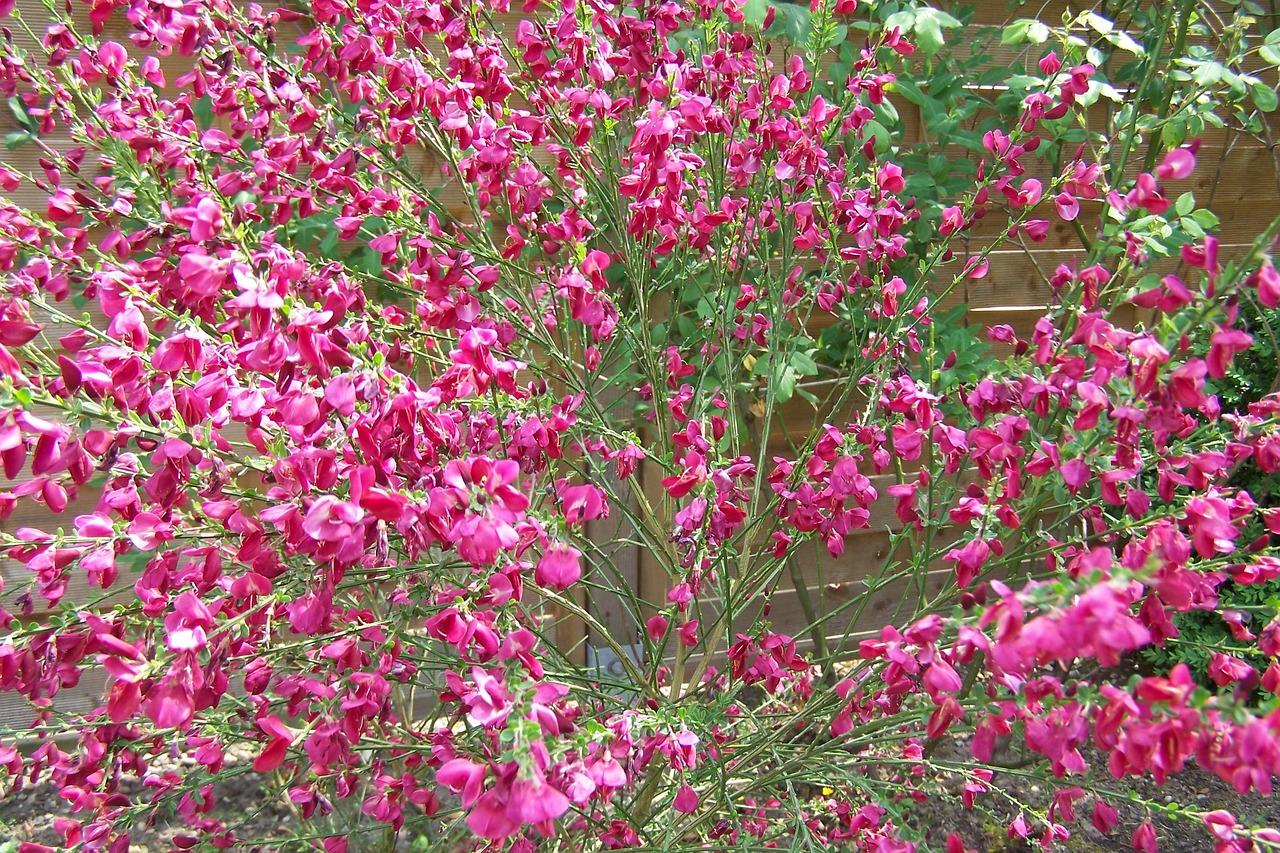 С красными метелками цветы