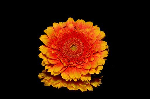 Orange, Fleur, Automne
