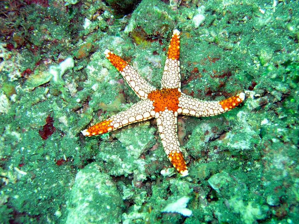 Ocean, Mare, Stella Marina, Subacquea, Sott'Acqua, Star