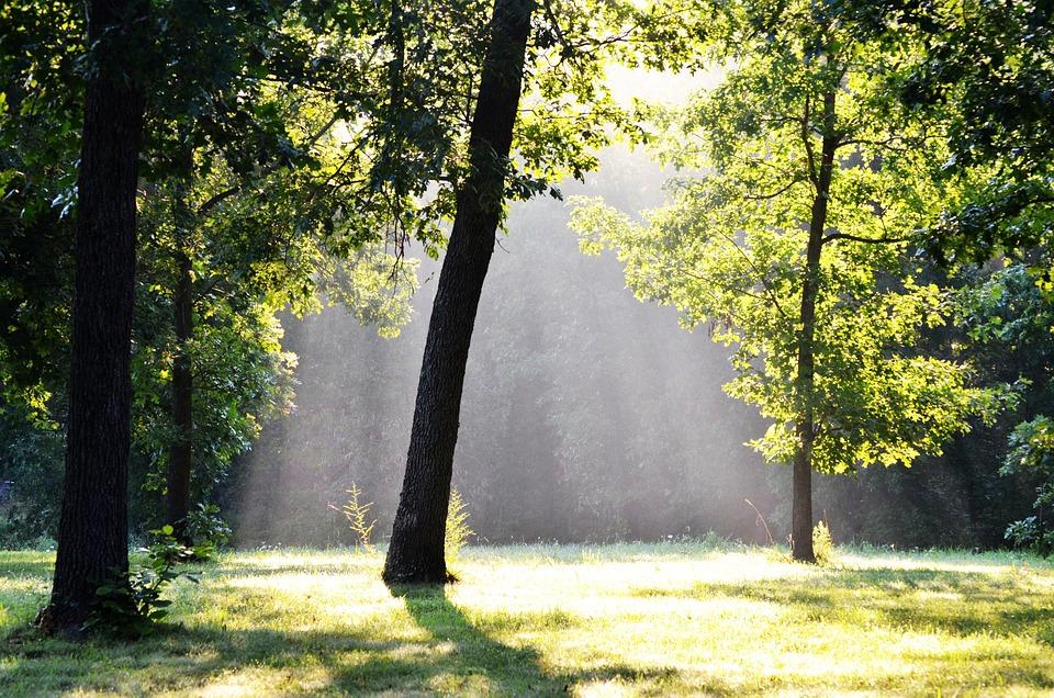 木, 霧, 森林, 太陽光線, 朝, 林, 太陽, シャドウ