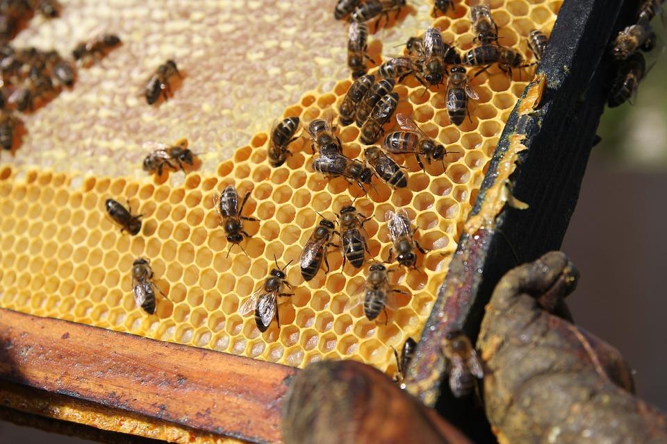 Bee, Colmena, Célula, Miel, Cera
