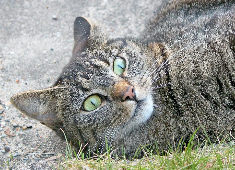 Cat Felidae Free Photo On Pixabay