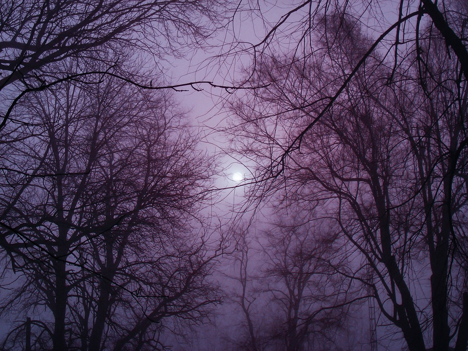 Winter, Fog, Outside, Cold, Branches, Mist