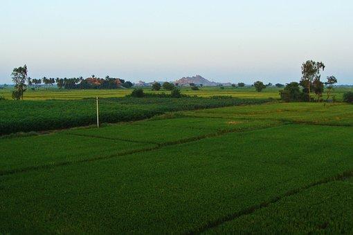 Tungabhadra Plains, Raichur, Rice Fields