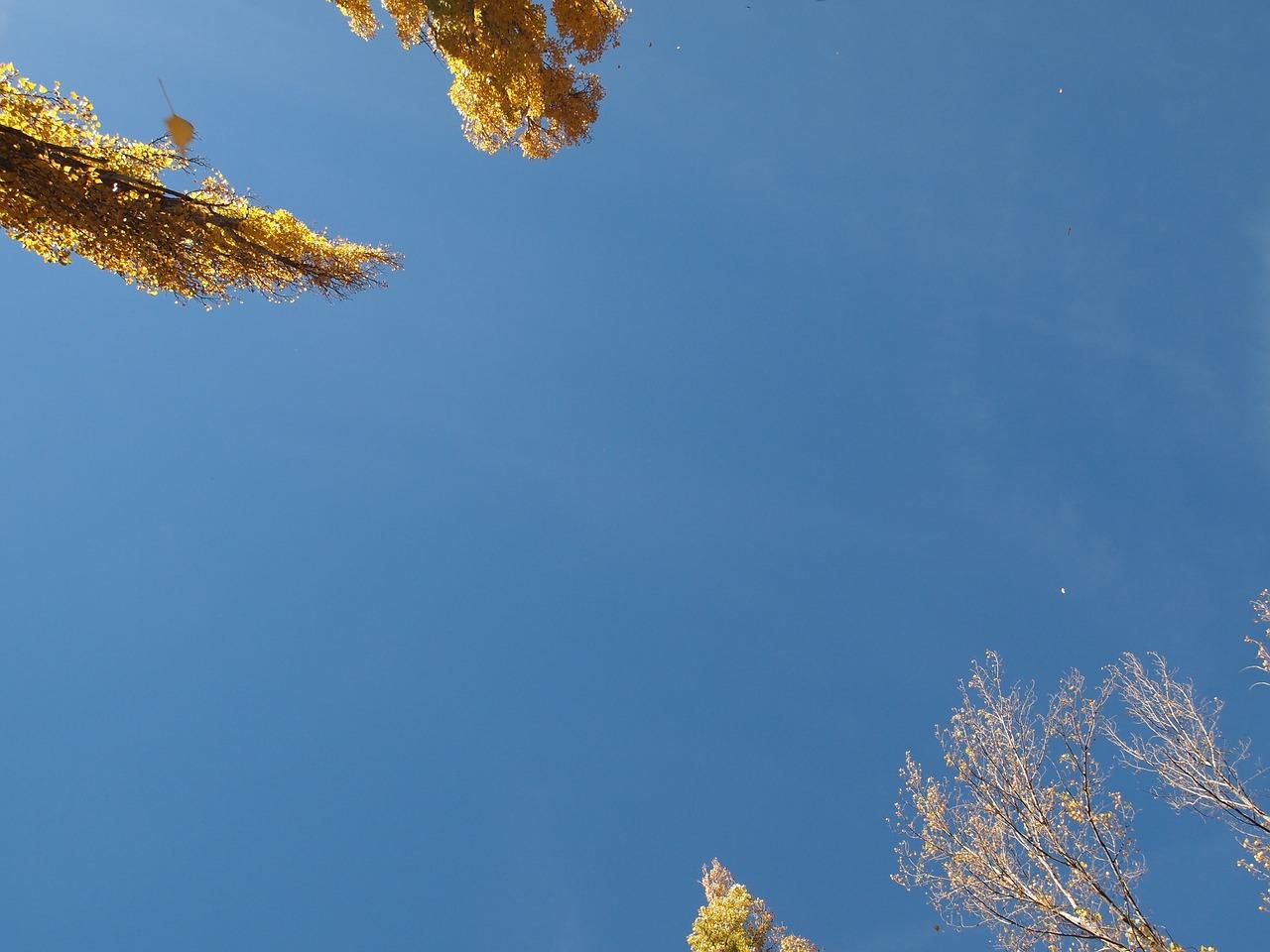 тополя и небо картинки