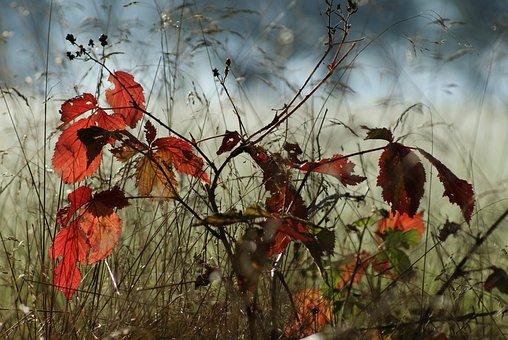 """Képtalálat a következőre: """"őszi erdő"""""""