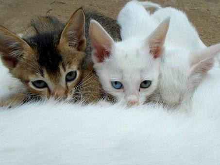 Kucing, Minum Susu, Cat Wajah, Cat Mata