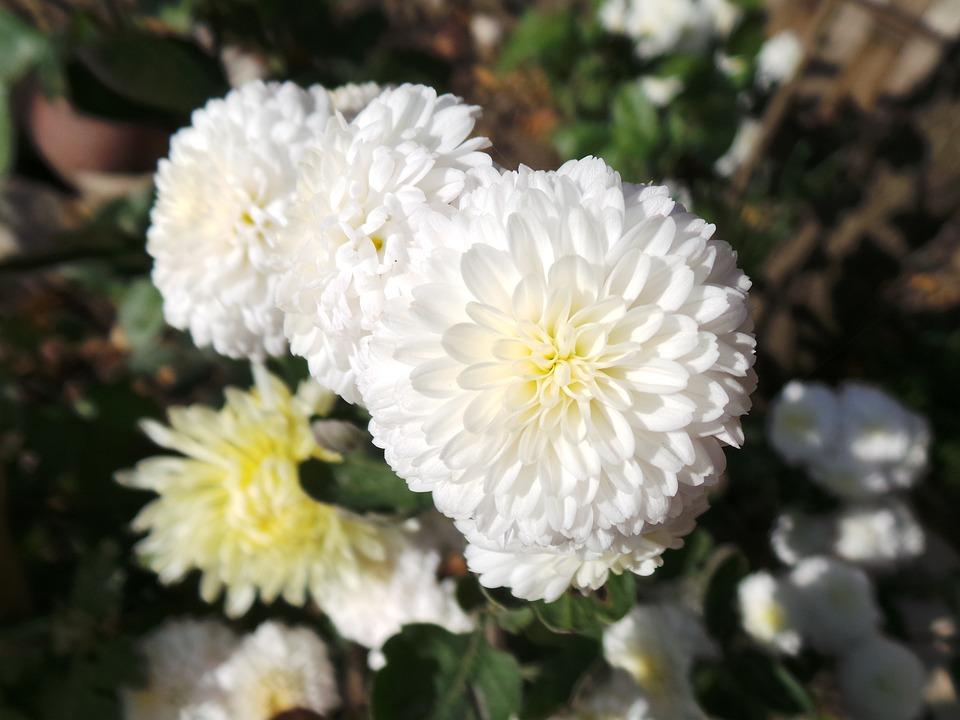 Blumen Schöne Weiß · Kostenloses Foto auf Pixabay