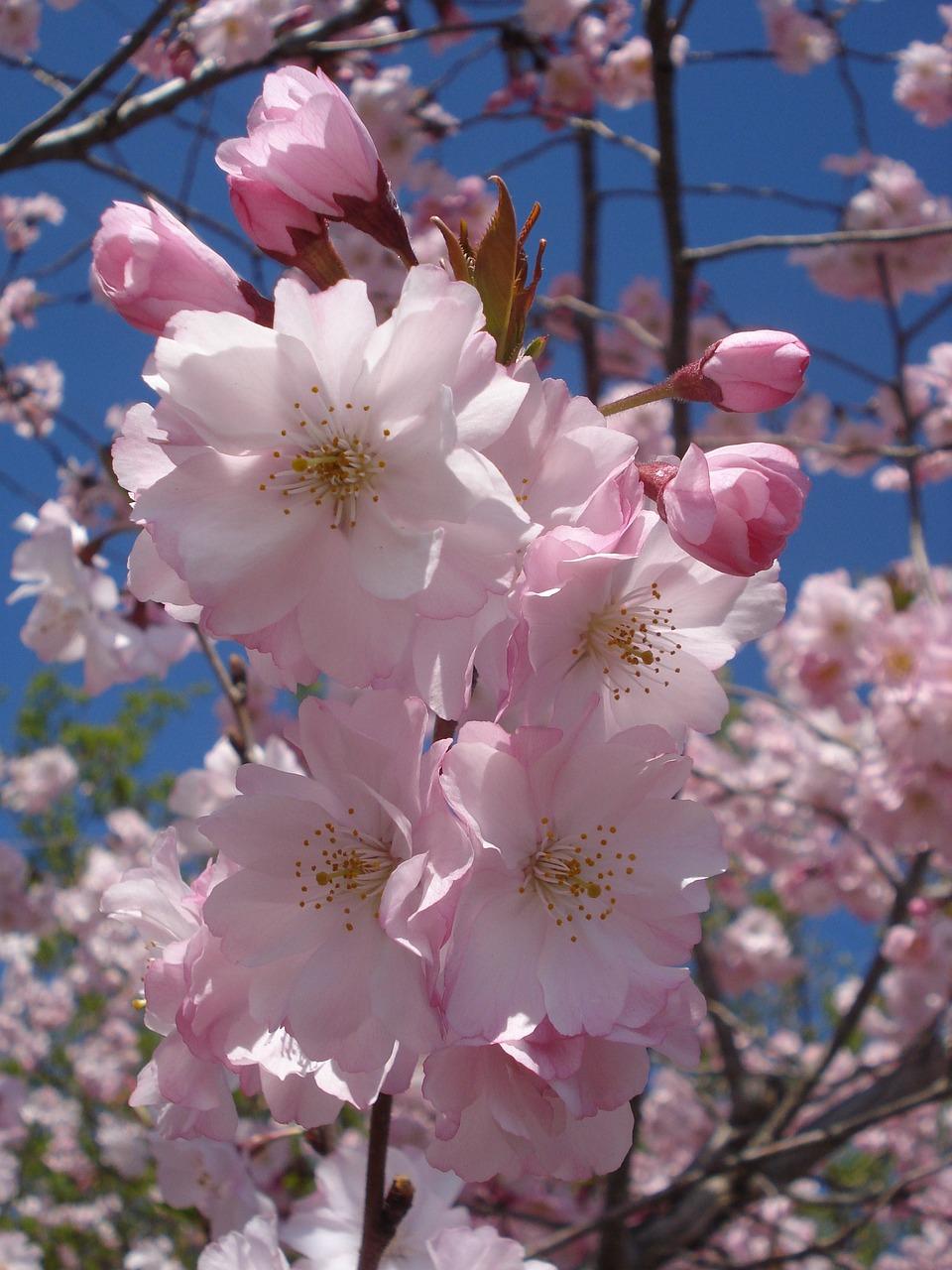 баб картинки на телефон цветущие деревья москве после