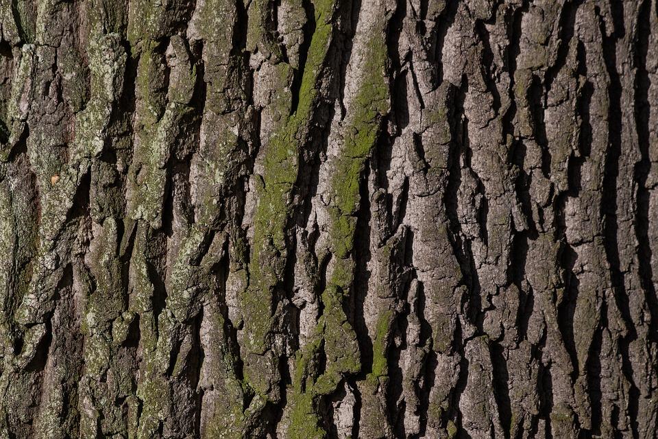 Borke, Baum, Rinde, Eiche, Alte Eiche, Bast