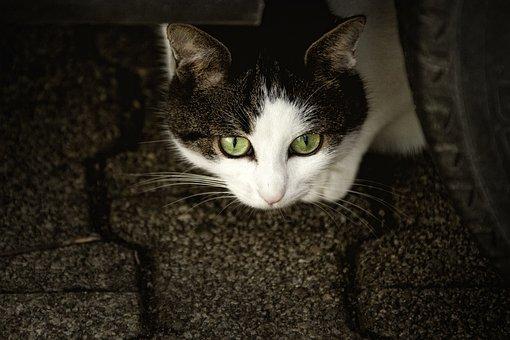 Katze, Scheu, Katzenaugen, Ängstlich