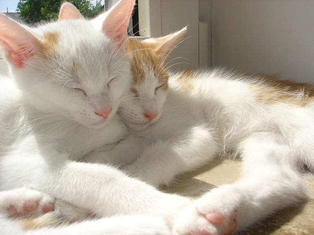 Cute Cat Couple Pictures