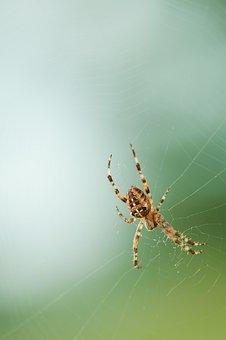 Spider, Network, Nature