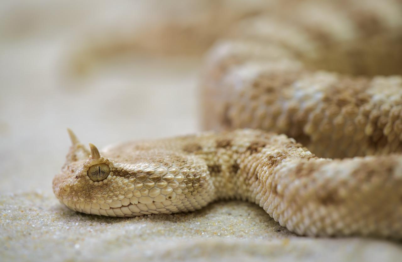 Беременная видеть во сне змею