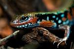 reptile, terrarium