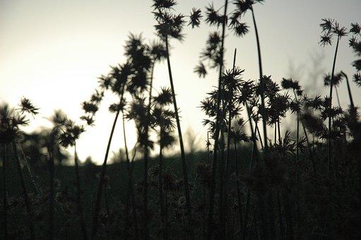 Plants, Silhouettes, Dark, Flora