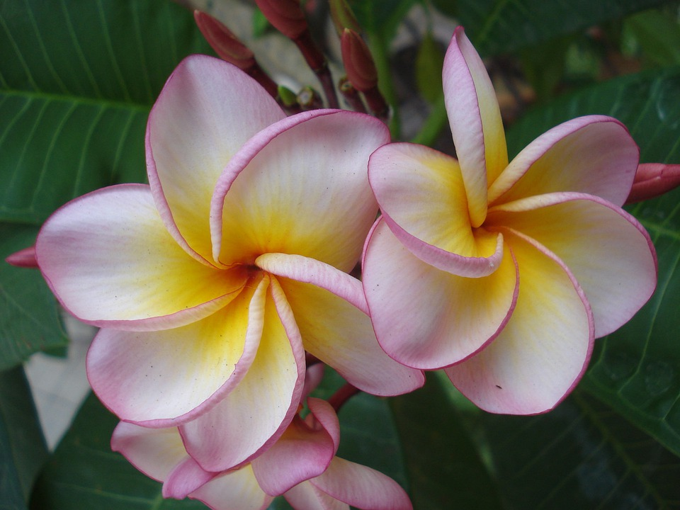 free photo tropical, flowers, petals, exotic  free image on, Beautiful flower