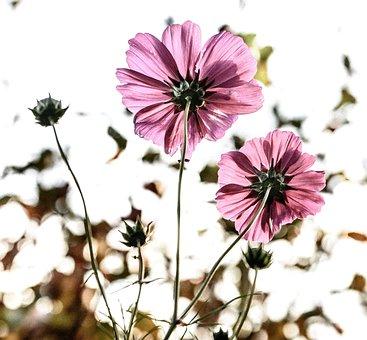 Flowers, Bloom, Pink, Wild Flower