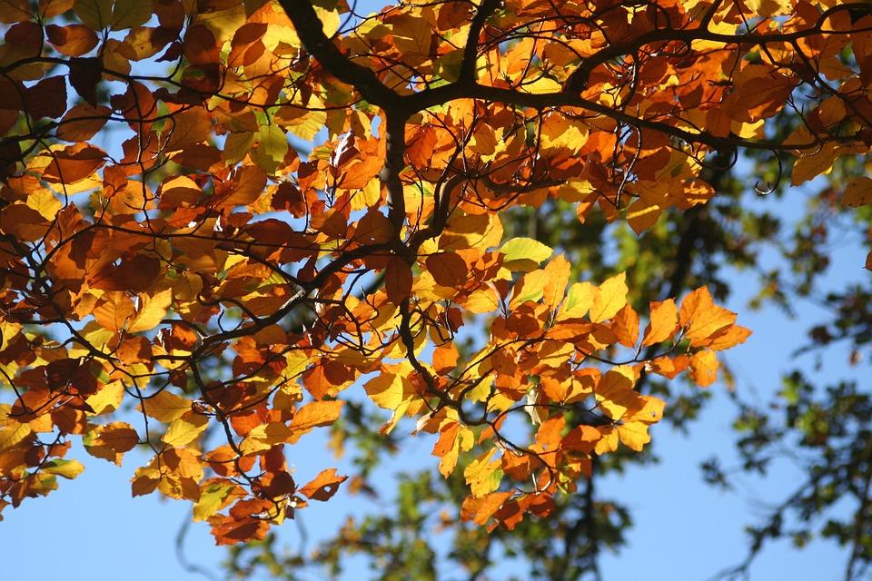 Fall, Foliage - Free images on Pixabay