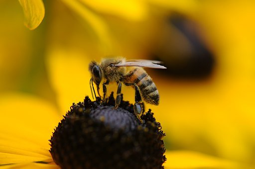 Bee, Wasp, Spring, Flower, Yellow