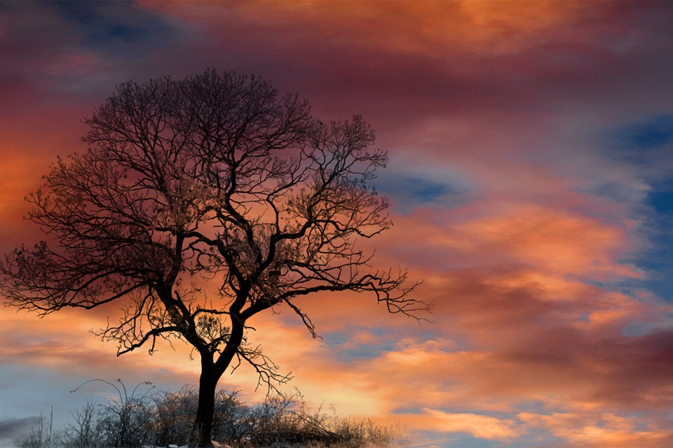 Trees Silhouette Sunset Dramatic Sky Clouds Tr...