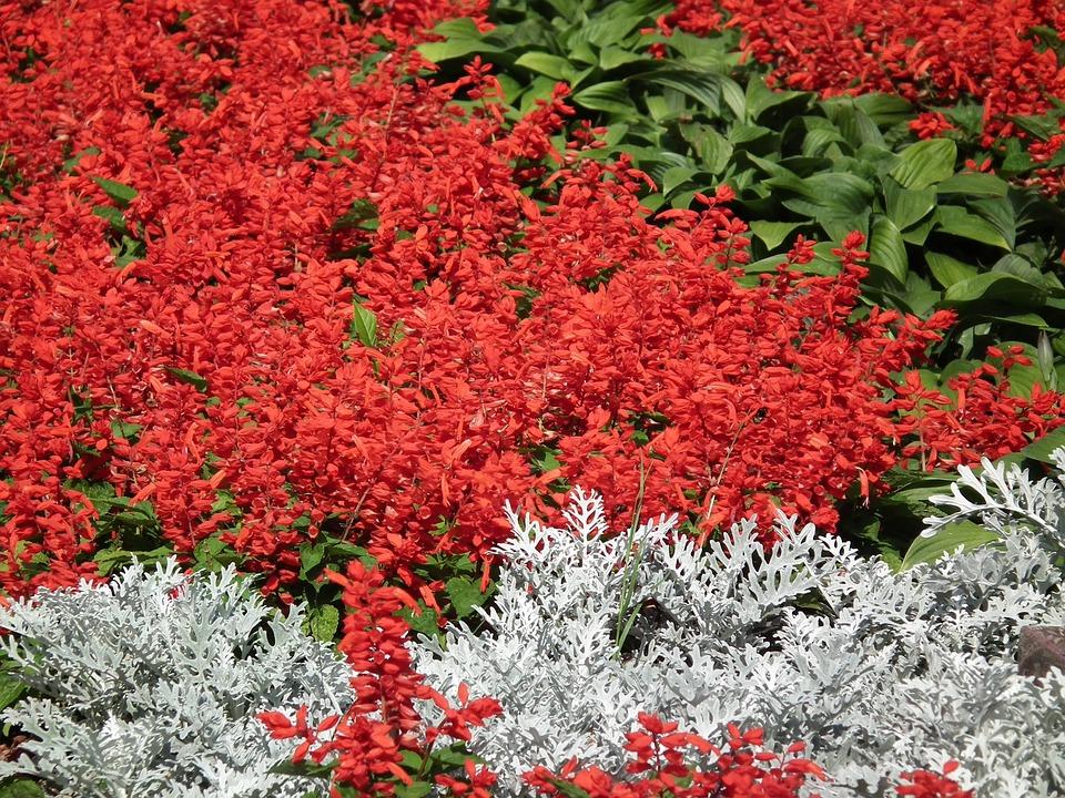 Fleurs Plate Bande Fleur De Jardin - Photo gratuite sur Pixabay