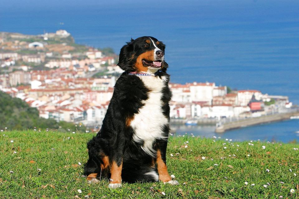 Cuántos perros hay en España