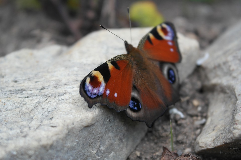 Kelebek Böcek Boyama Pixabayde ücretsiz Fotoğraf