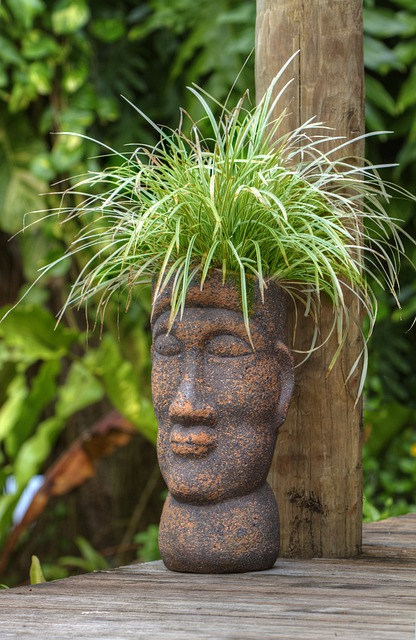 pot head polynesian plant 183 free photo on pixabay