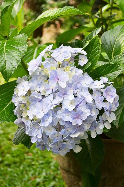 Fleur Fleurs Mauve Clair - Photo gratuite sur Pixabay