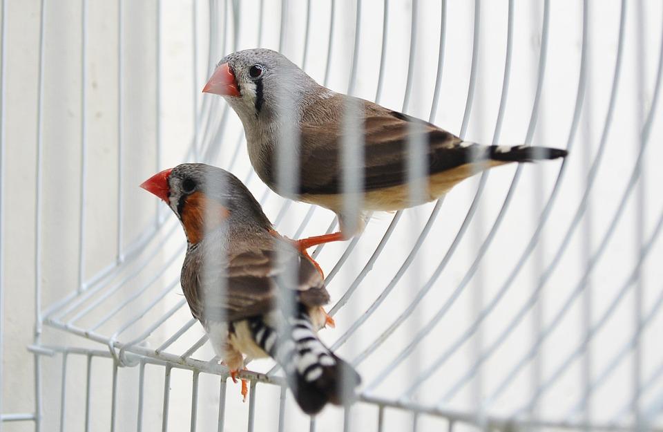 Cómo elegir el pájaro adecuadoCómo elegir el pájaro adecuado