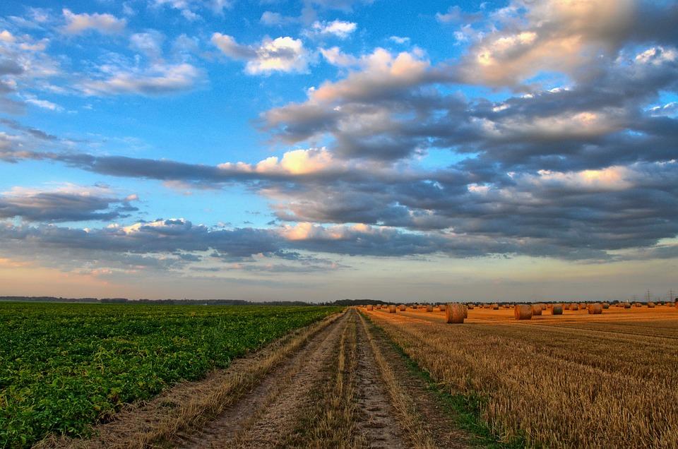 Field, Road, Rural, Country Road, Rural Road, Farm