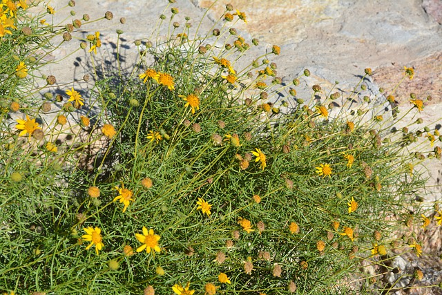 Daisy Floral Plants · Free Photo On Pixabay