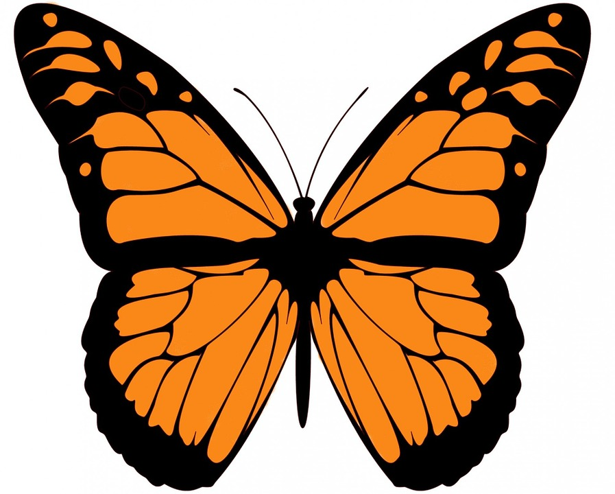 Monarch Butterfly Large Free Image On Pixabay