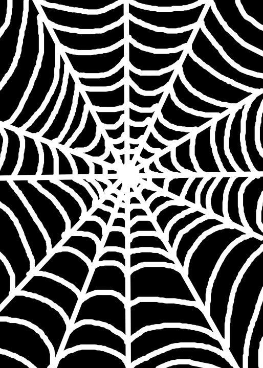 free illustration white spider web black free image