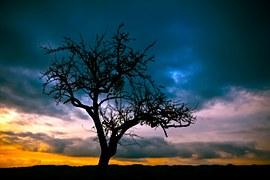 Arbre, Sunset, Paysage, Nature