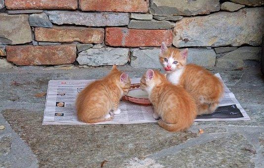 Kucing, Anak Kucing, Makan, Lucu, Lezat