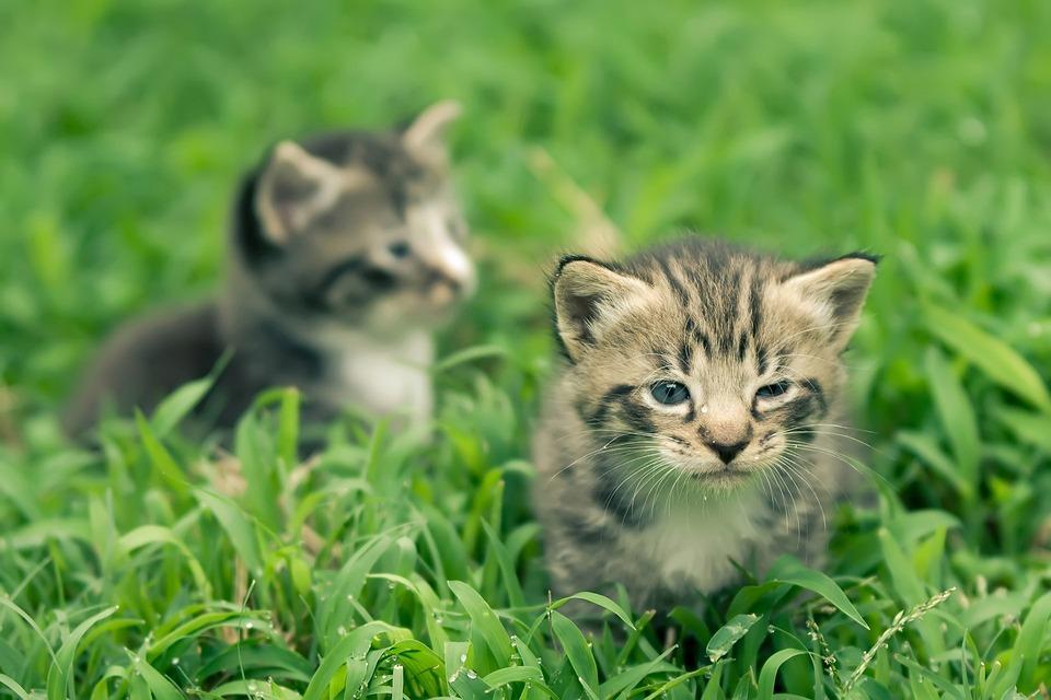46 Gambar Hewan Kucing Yang Lucu HD