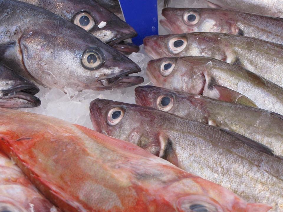 Fisch, Hering, Geräuchert, Tier, Frisch, Lebensmittel