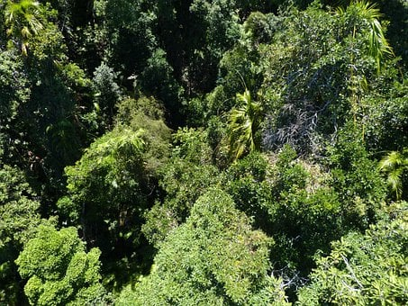 Forest, Rainforest, Green, Flora