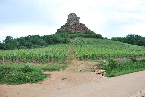Rock, Vineyard, Burgundy, Wine