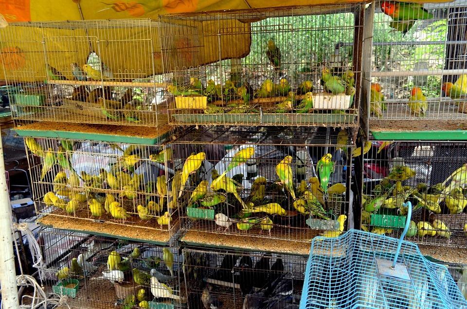 神戸で小鳥を扱ってくれるペットシッター/ホテル …