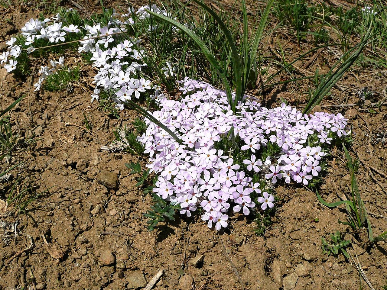 шутка какие цветы любят песчаную почву с фото приняв изрядно огненной