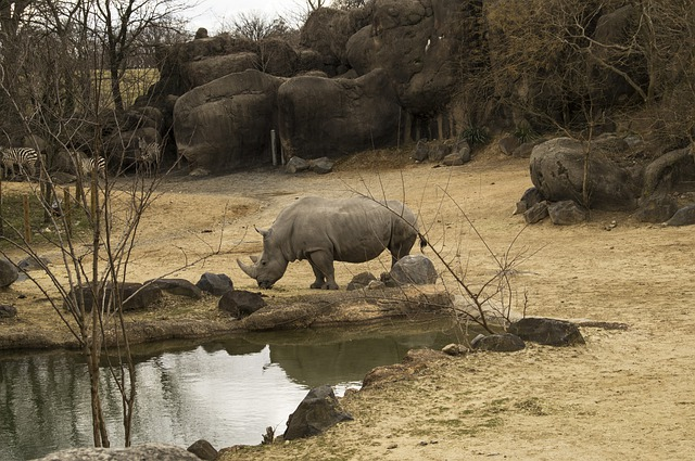 free photo  rhinoceros  rhinos  zoo  animal - free image on pixabay