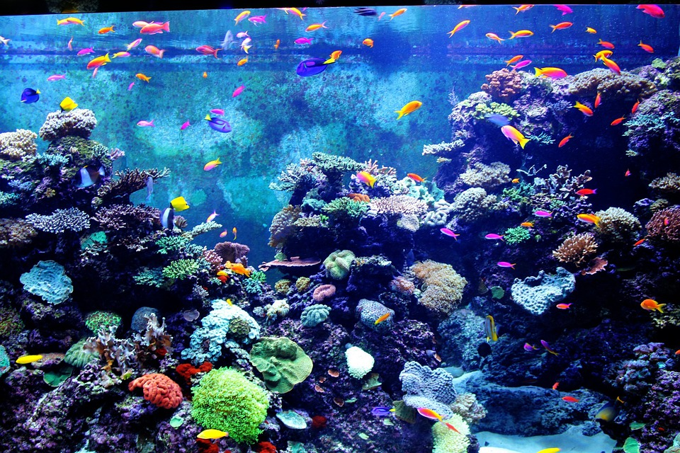 Aquarium color poissons petit photo gratuite sur pixabay for Red para peces de acuario