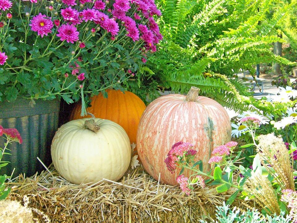 Høst Blomster Gresskar · Gratis foto på Pixabay