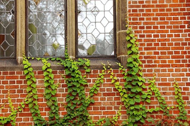Windows Walls Ivy · Free Photo On Pixabay