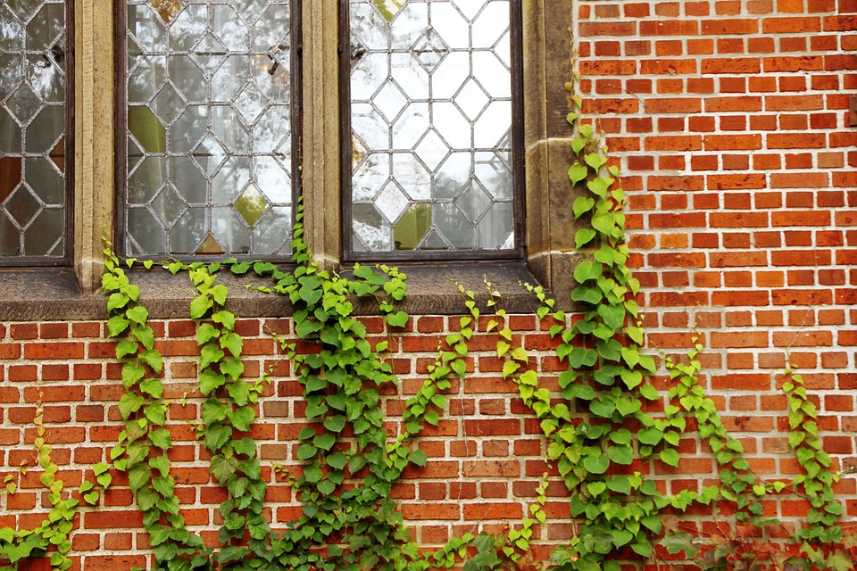 Windows Walls Ivy · Free photo on Pixabay